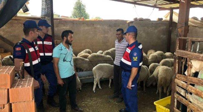 Koyun Hırsızlığı Şüphelilerinden 2'si Tutuklandı