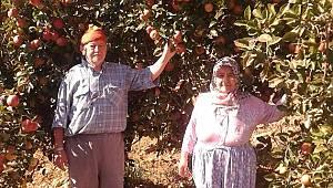 Simav'da Elma Bereketi, Bir Ağaç Yaklaşık 500 Kilo Ürün Veriyor