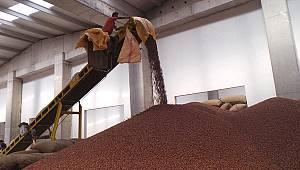 Üreticiden 12 Liraya Alınan Fındık İşlenip 60 Liraya Satılıyor