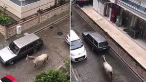 İzmir'de Otomobilinin arkasına atı bağlayan sürücüye 102 TL ceza
