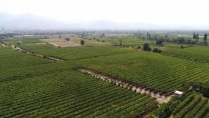 Manisa 2018 Yılında 500 Bin Tondan Fazla Tarım Ürünü İhraç Etti