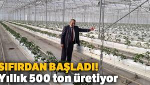 Sıfırdan başladı, yıllık 500 ton domates üretiyor
