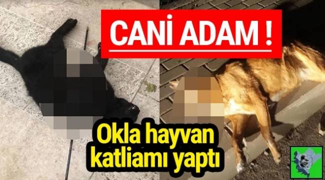 İzmir Urla'da akıllara durgunluk veren hayvan katliamı yapıldı.