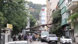 Aydın'ın Efeler ilçesinde kuvvetli sağanak ve fırtına