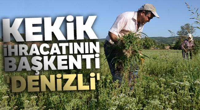 Kekik ihracatının başkenti 'Denizli'