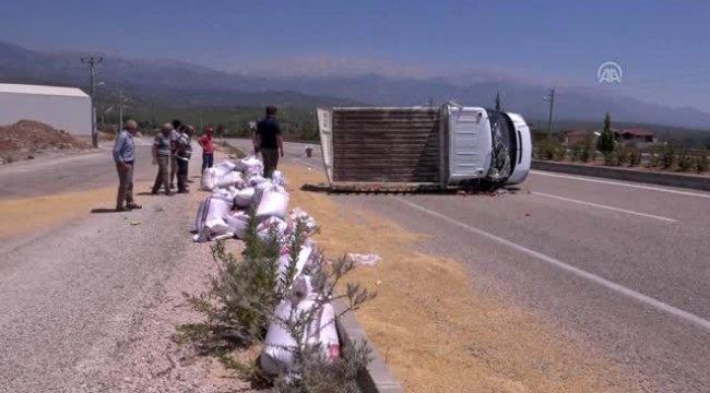 Arpa yüklü kamyonet devrildi: 3 yaralı