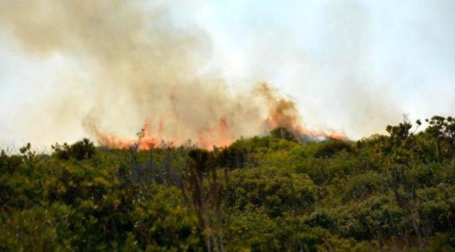 Didim'de 60 dönümlük makilik alan yandı