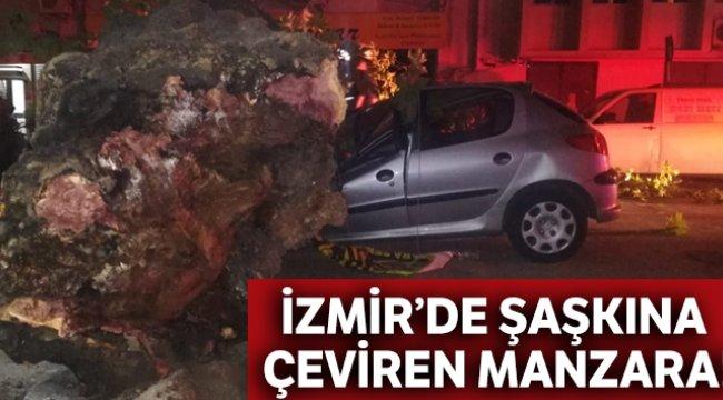 İzmir'de 3 otomobilin üzerine ağaç devrildi