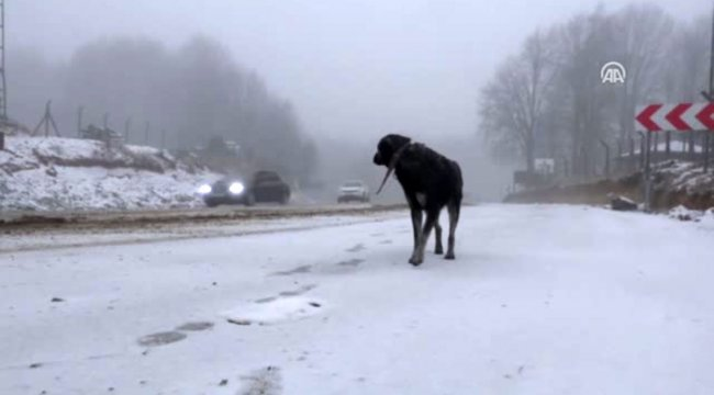 Yüksek kesimlerde kar yağışı etkili oldu