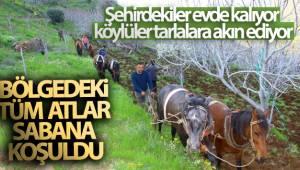 Aydın'da üretim seferberliği: Bölgedeki tüm atlar sabana koşuldu