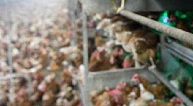 Güney Kore'de 67'nci kuş gribi vakası tespit edildi