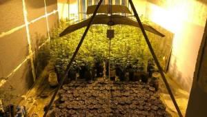 Polisleri bile şaşkına çeviren görüntü! Evini uyuşturucu tarlasına çevirip, güneş panelleriyle ısıtmış